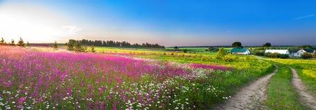 Lantlig landskappanorama för sommar med en blomstra äng royaltyfria bilder