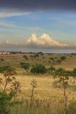 LANTLIG LANDSKAPSOMMAR Alta Murgia National Park: Cornfield som överträffas av moln Apulia Italien Royaltyfri Bild