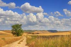 LANTLIG LANDSKAPSOMMAR Mellan Apulia och Basilicata: bygd med cornfielden som domineras av moln italy Arkivfoto