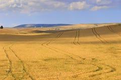 LANTLIG LANDSKAPSOMMAR Mellan Apulia och Basilicata: bygd med cornfielden som skuggas av moln italy Royaltyfria Bilder