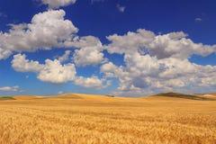 LANTLIG LANDSKAPSOMMAR Mellan Apulia och Basilicata: det bergiga landskapet med cornfielden dominerade vid moln italy Arkivbild