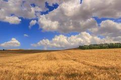 LANTLIG LANDSKAPSOMMAR Mellan Apulia och Basilicata: det bergiga landskapet med cornfielden dominerade vid moln italy Royaltyfri Bild
