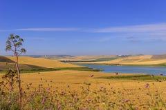 LANTLIG LANDSKAPSOMMAR Mellan Apulia och Basilicata: sädes- fält i ottan Poggiorsini Bari - Italien-Basentello sjö Royaltyfria Foton