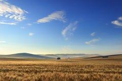 LANTLIG LANDSKAPSOMMAR Mellan Apulia och Basilicata: vetefält på gryning italy Bergigt land: i bakgrunden övergiven farmhou Royaltyfri Foto