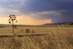 LANTLIG LANDSKAPSOMMAR Skördat fält med baler av hö - (Apulia) ITALIEN Arkivbild