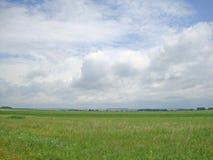 Lantlig landskapsommar Vit fördunklar över ett grönt fält Arkivbilder