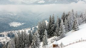 lantlig liggande lyckligt nytt år Djupfrysta mycket härliga träd Vintersaga arkivfilmer