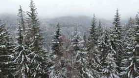 lantlig liggande lyckligt nytt år Djupfrysta mycket härliga träd Vintersaga stock video