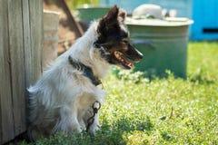 Lantlig liten hund Arkivfoto