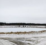 Lantlig Minnesota vinter royaltyfri fotografi