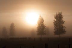 Lantlig morgondimma Arkivfoton