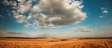 Lantlig panorama för sommartid Royaltyfri Foto