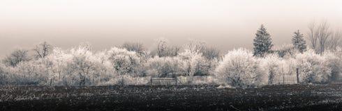 Lantlig panorama för vinter arkivbild