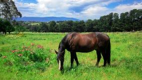 Lantlig plats med en häst som betar gräs på en äng i vår
