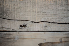 Lantlig riden ut grå wood bakgrund Arkivfoto