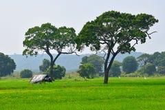 Lantlig skönhet Sri Lanka för morgon royaltyfri foto