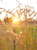 Lantlig solnedgång Arkivbilder