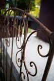 Lantlig spaljé med gamla vinrankor som växer på den royaltyfri bild