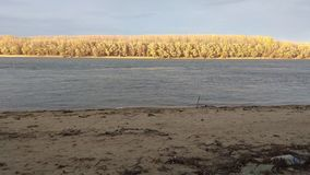 Lantlig strand, flod och gul höstkust med träd royaltyfria bilder