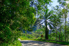 Lantlig thai väg arkivbilder