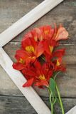 Lantlig träbakgrund för vit för Alstromeria för ram orange Copmosition för blomma bukett ordning Arkivfoto