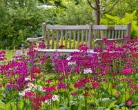 Lantlig trädgårds- bänk Arkivfoto