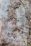 Lantlig trätextur - bakgrund - natur Royaltyfri Bild