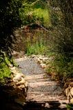 Lantlig trappa i en trädgård Arkivfoton