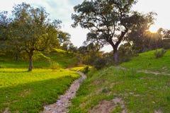 Lantlig väg i ett grönt fält mot solnedgångbakgrund arkivbild