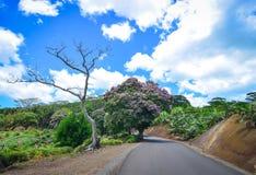 Lantlig väg i Mauritius Island Arkivfoto