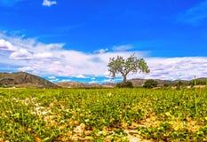 Lantlig väg i mitt av ett fält för grönt gräs i Andalusia arkivfoton