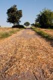Lantlig väg i skördlandskap Arkivfoto