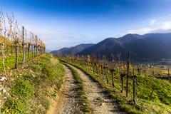 Lantlig väg i Wachau Lägre Österrike royaltyfria bilder