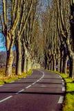 Lantlig väg med höga träd på båda sidor Royaltyfri Bild
