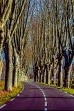 Lantlig väg med höga träd på båda sidor Arkivbilder