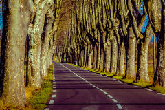 Lantlig väg med höga träd på båda sidor Arkivfoto