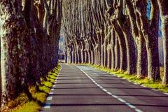 Lantlig väg med höga träd på båda sidor Fotografering för Bildbyråer