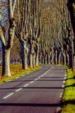 Lantlig väg med höga träd på båda sidor Royaltyfri Foto