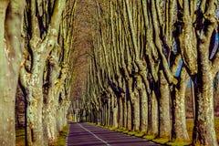 Lantlig väg med höga träd på båda sidor Royaltyfri Fotografi