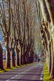 Lantlig väg med höga träd på båda sidor Royaltyfria Foton