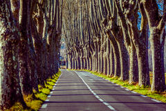 Lantlig väg med höga träd på båda sidor Arkivfoton