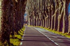 Lantlig väg med höga träd på båda sidor arkivbild