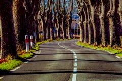 Lantlig väg med höga träd på båda sidor royaltyfria bilder