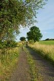Lantlig väg mellan ängar som fodras med träd Fotografering för Bildbyråer