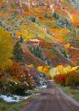 Lantlig väg nära Ridgeway Colorado royaltyfri bild