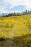 Lantlig väg och grönt fält in i bergen Arkivbilder