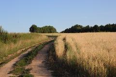 Lantlig väg på kanten av ett fält Arkivfoto