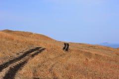 Lantlig väg på kullarna Arkivbild
