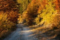 Lantlig väg till och med höstskogen, Rodopi berg, Bulgarien Arkivfoto