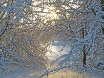 lantlig vinter för bana Royaltyfri Foto